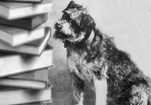 Read to a Dog at your library