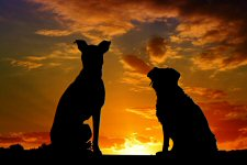 dogs and sunset photo