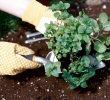 [gardening graphic]