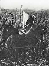 Rudolph Umland harvesting corn, 1933 or 1934.