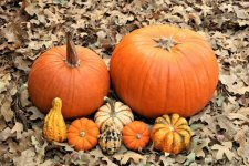 photo of pumpkins and gourds